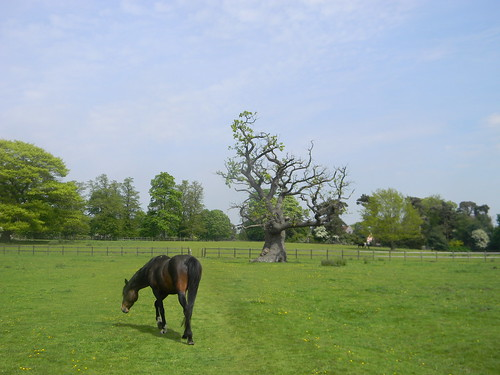 Horse and tree in field