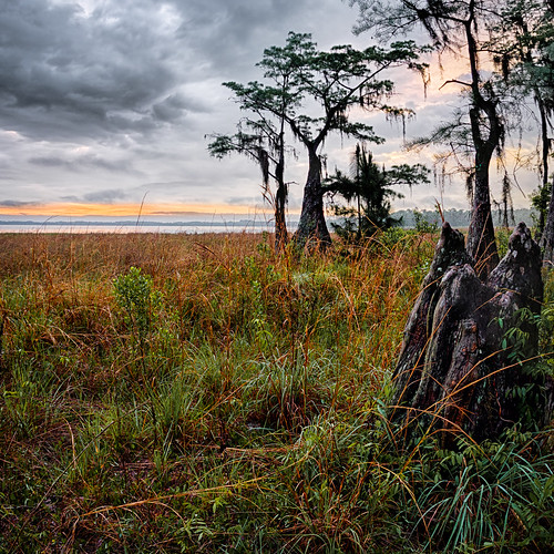 sky panorama usa cloud lake tree water grass sunrise landscape dawn unitedstates florida explore cypress clermont centralflorida lakelouisastatepark edrosack