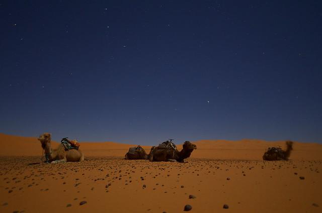 Dromedarios en la noche del desierto bajo las estrellas