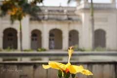 Chowmahalla Palace (Hyderabad, India)