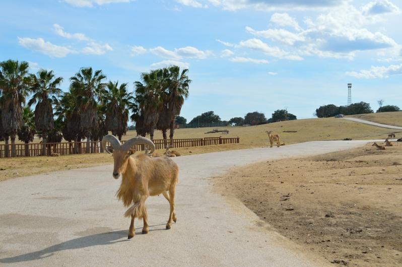lara-vazquez-madlula-blog-safari-madrid-naturaleza-salvaje