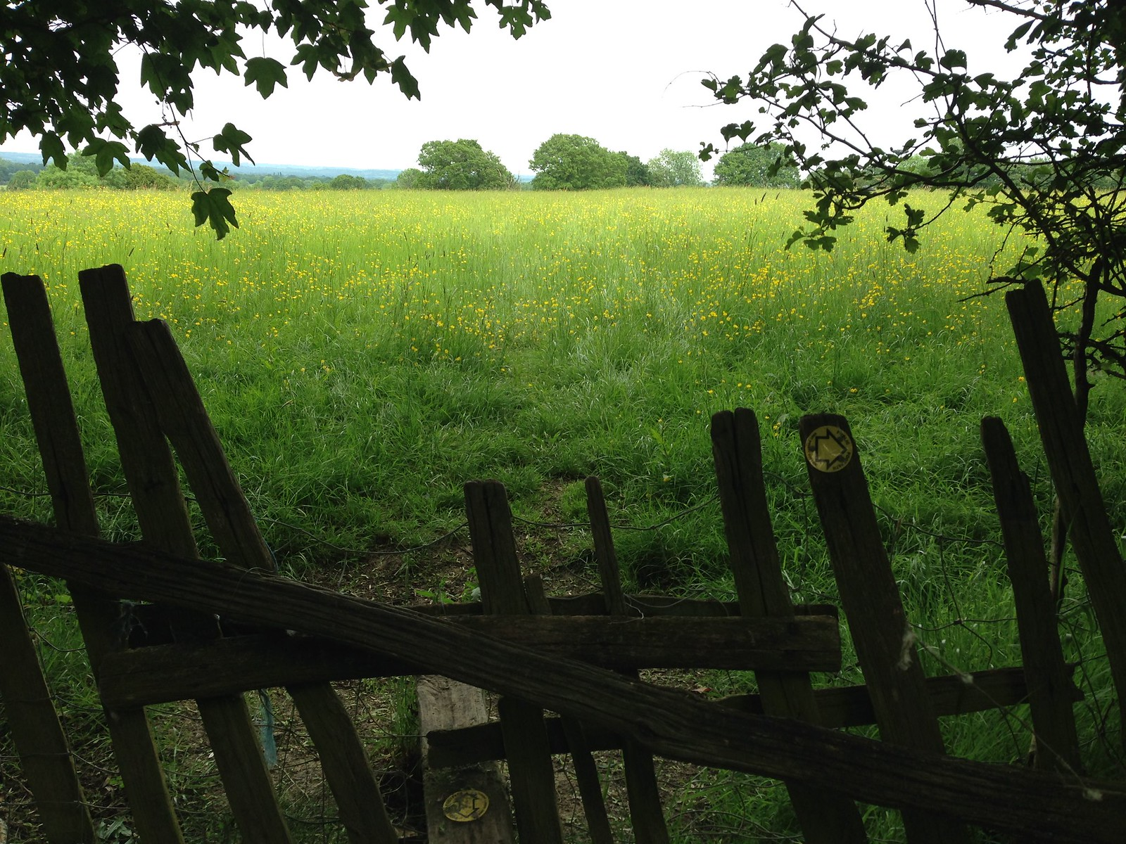 SWC Walks Book 3 Walk 80 Staplehurst to Headcorn