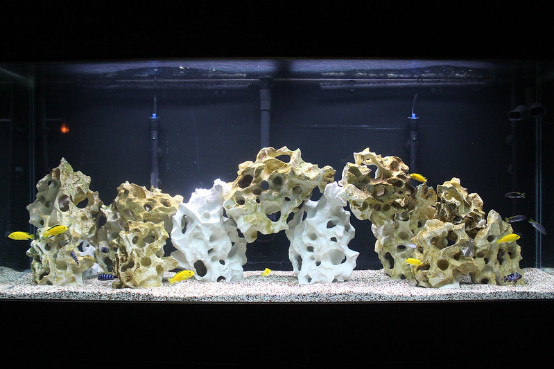Cichlid forum rate the the tank above you for Above water fish tank