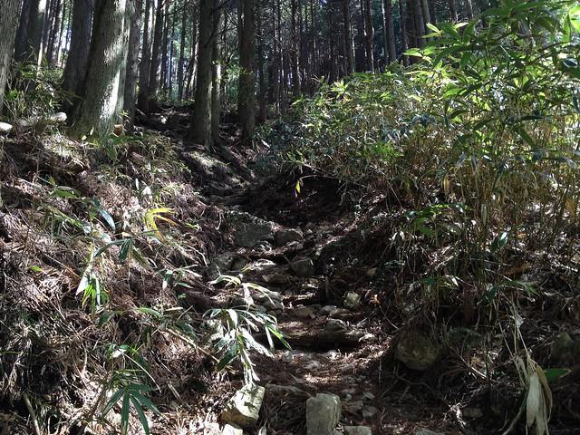 高賀山 登山道 御坂峠前の急登