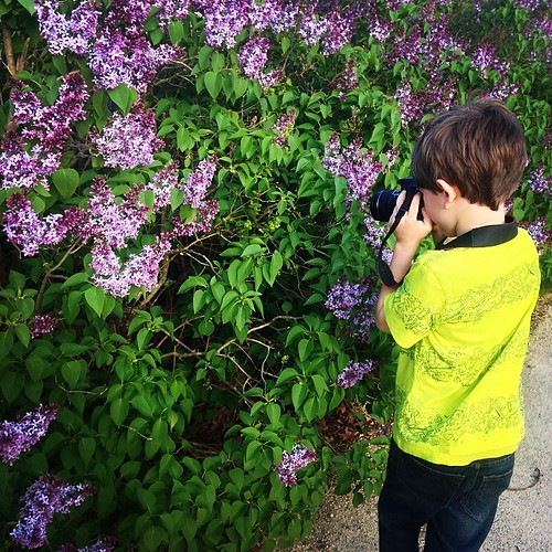 Our boy taking pictures of the lilacs.