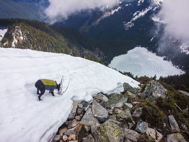 Boomer on Mount Defiance; Lake Kulla Kulla below.