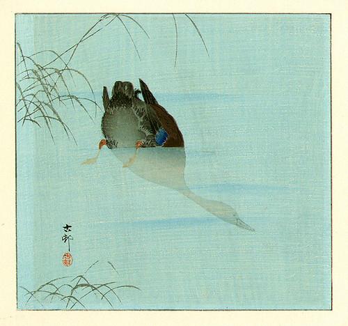 026- Pato real buceando-1910-Ohara Koson -via-Ukiyu-e-org