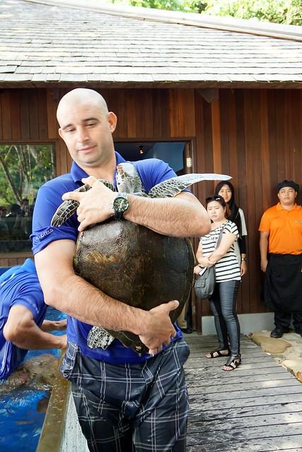 Ninja the turtle release - rebecca saw - gaya island resort review -003