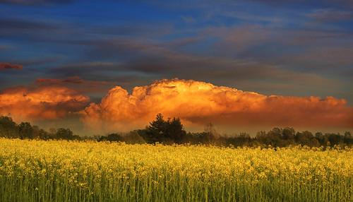 sunset sky italy clouds countryside italia day cloudy awesome country friuli rapeseed copypaste moruzzo veryflickr whiteiswhite onlymyfavorite incognitogroup sowelltaken