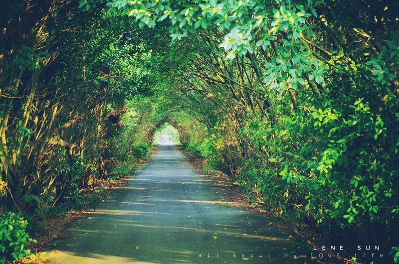 一路隨拍,從屏東市到水門堤防