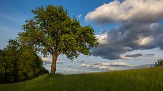 Tree 1/3