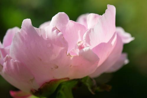 06-14 flowers-3393-Edit