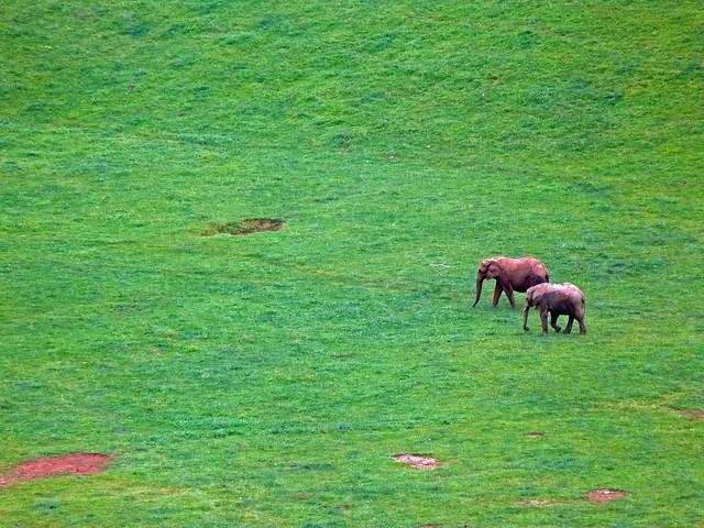 Elefantes en Cabárceno (Cantabria)
