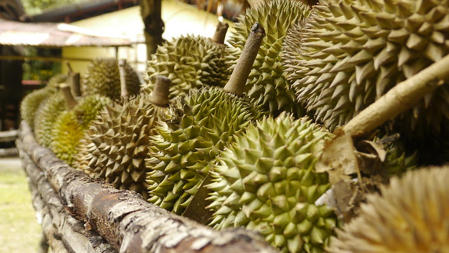 Durian durian durian