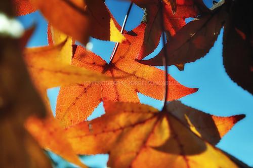chile travel viaje autumn santiago naturaleza nature colors leaves hojas photography colores otoño fotografia