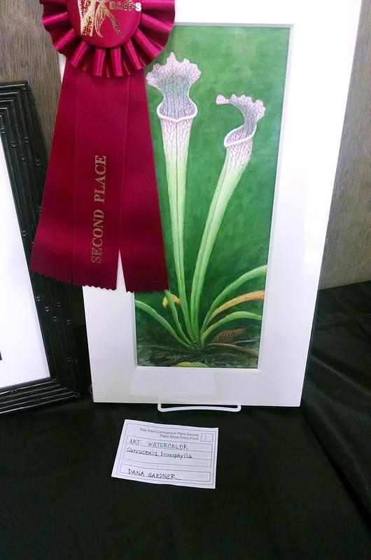 Sarracenia leucophylla, watercolor, Dana Gardner