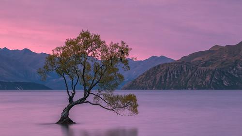 new sunset lake tree zealand lone 90mm wanaka tse swarts sebastianwarneke