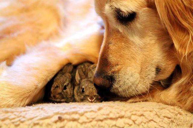 1_animal-love.jpg