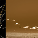 Brenda Biondo; Indian Rice Grass slash Plains Sky; Archival pigment print; 25x47; 2012; Courtesy of Goodwin Fine Art -