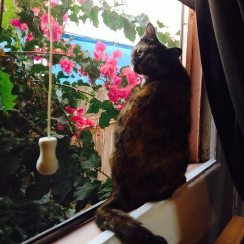 My precious Cleo.