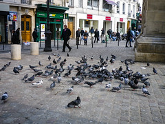 Pigeons at Porte Saint-Denis
