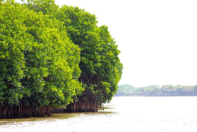 Surabunnai Mangrove