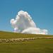 Cloud and Sheep by Jonathan Kos-Read
