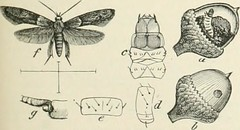 """Image from page 76 of """"The Century dictionary and cyclopedia; a work of universal reference in all departments of knowledge, with a new atlas of the world .."""" (1897)"""