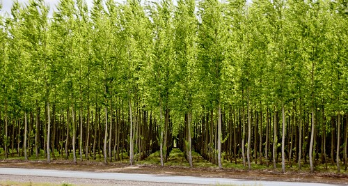 tree farm or i84 hermiston a65v
