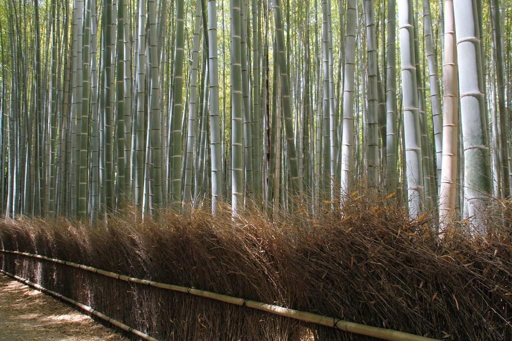 Arashiyama – Bambusskov (3)