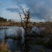 everett nature preserve by seewhy