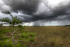 Everglades rainfall by James T Johnson