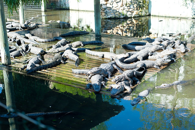 Gator2 (1 of 1)