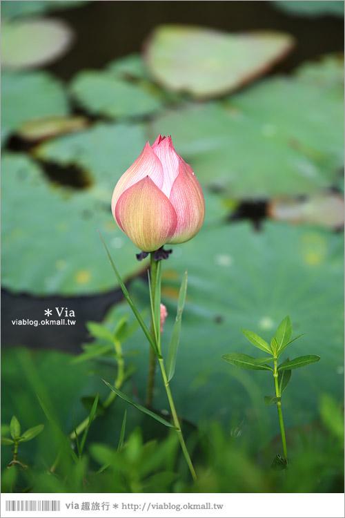 【彰化大村景點】大村雙心池塘/平和夕照平台@浪漫必遊‧約會拍照的好去處~15