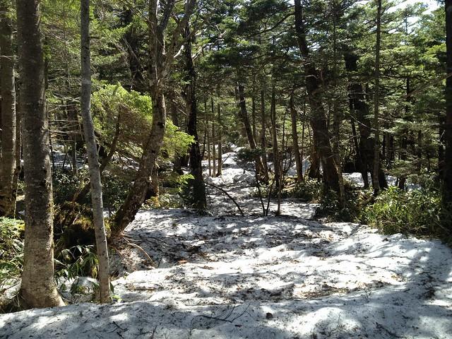 恵那山 登山道 残雪