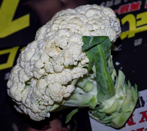 菜市場買回來的花椰菜,裡頭有時可發現小菜蛾的幼蟲,甚至成蟲從中鑽出。李鍾旻攝影