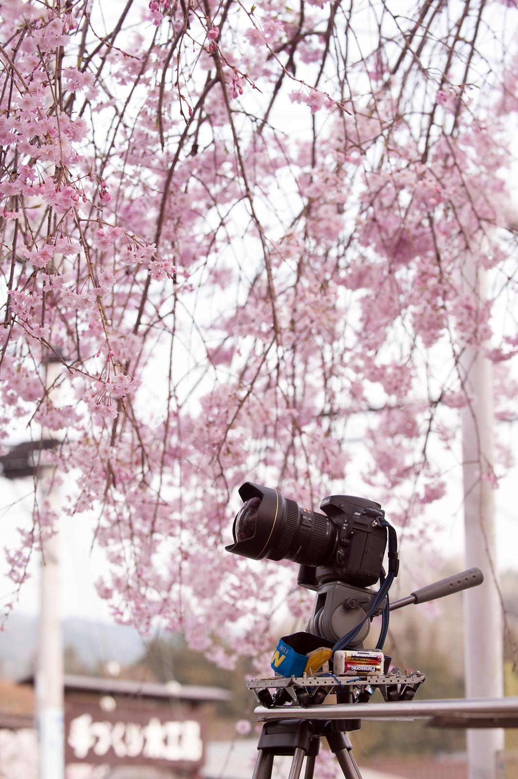 自作レールドリーで春を撮る。