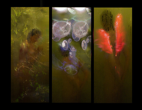 sea monkeys (tryptic black panels) by Stephen R Mingle /Gonzo®