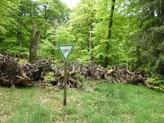 Naturwaldreservat