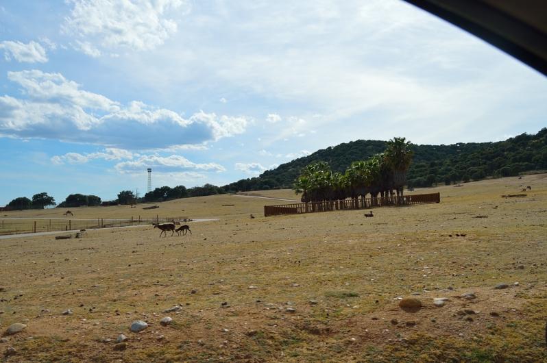 lara-vazquez-madlula-safari-madrid-paisaje