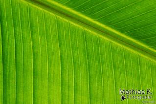 Blattgrün | Projekt 365 | Tag 183