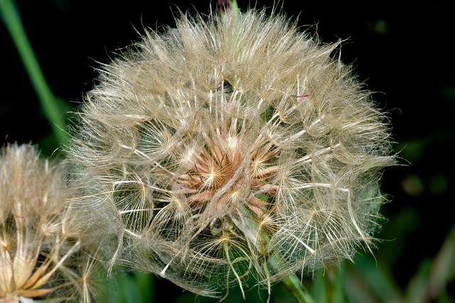 2014:07:10 - Glasgow Botanic Gardens - Sigma 180mm Macro - 023