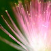 Nature's fiber optics by amazon2008