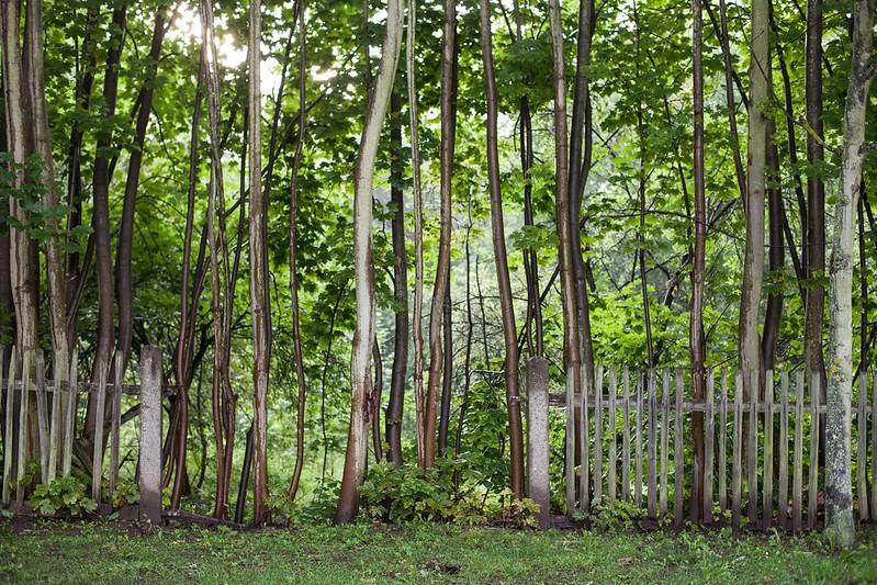13/7/14 Mend Your Fences