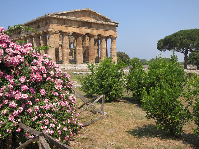 Temple of Neptune ~ Paestum Roses