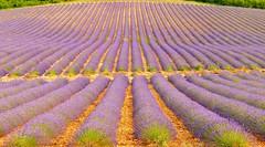 Provence - Provenza