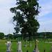 Old Tree, Bethel Cemetery - North of Orangeville, Orange County, Indiana by danjdavis