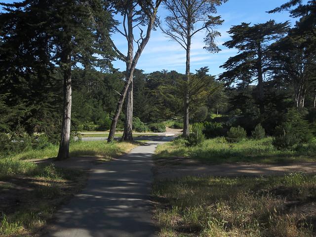 in Golden Gate Park, San Francisco (2014)