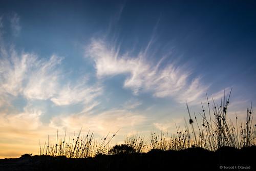 blue light sunset summer sky nature beautiful silhouette norway clouds contrast landscape evening coast landscapes norge nikon colours peace sundown angle wide straw calm coastal vegetation serene nikkor noreg d610 norskekysten nikond610