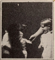 "Image from page 136 of ""Baltimore and Ohio employees magazine"" (1920)"